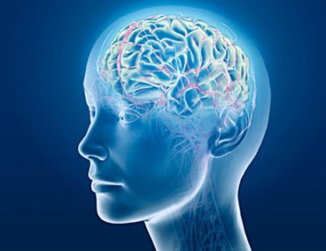 brain_woman.jpg (104.91 Kb)