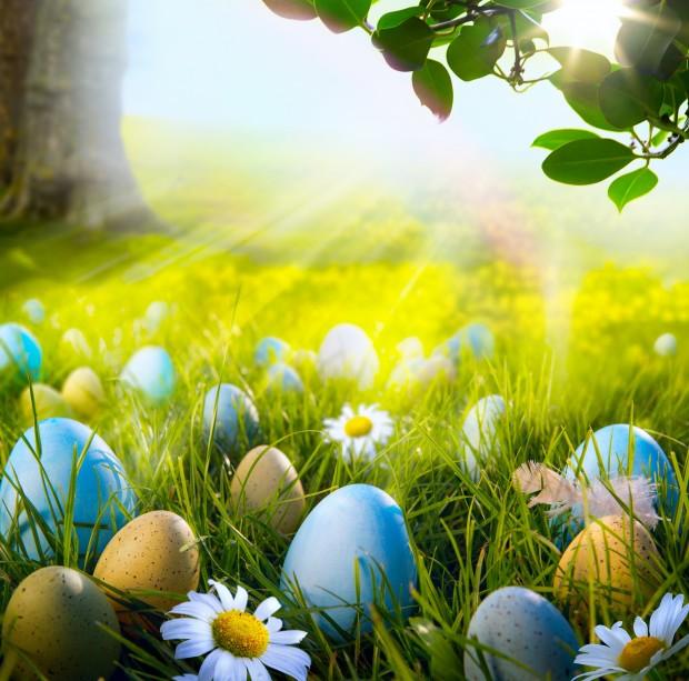 egg4.jpg (101.69 Kb)