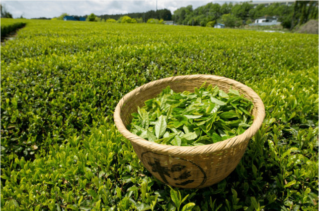 green_tea.jpg (136.54 Kb)