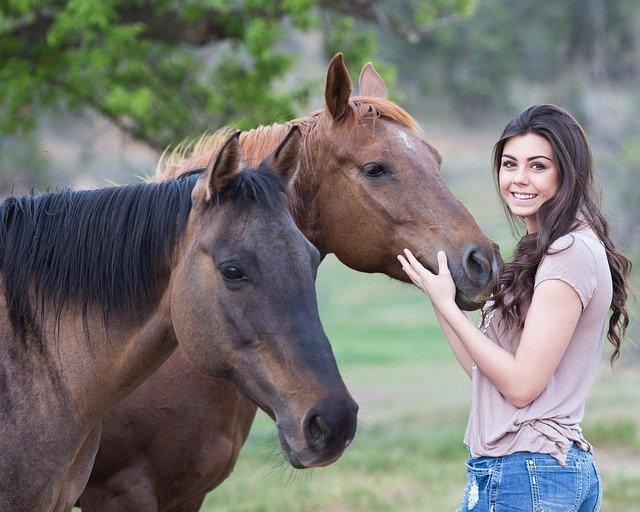 horses-1996285_640.jpg (71.99 Kb)