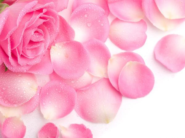 rose-water-3.jpg (29.24 Kb)