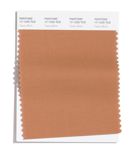 tawny-birch.jpg (71.79 Kb)